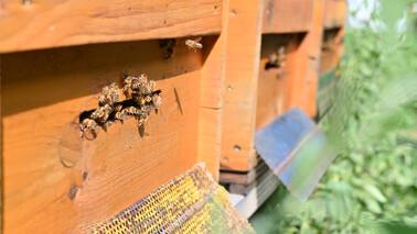 DAV Bienen im Alpinzentrum